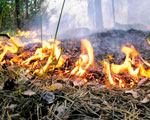 Пожарно–техническая экспертиза – причины, задачи