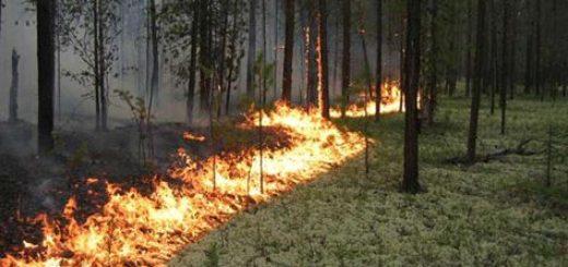 Экспертиза причин возникновения пожаров по вине человека: основное