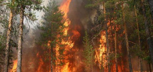 Установление причины пожаров