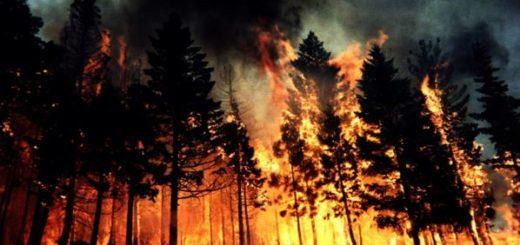 Экспертиза основных причин возникновения природных пожаров