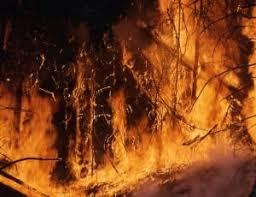 Независимая пожарная экспертиза ее преимущества