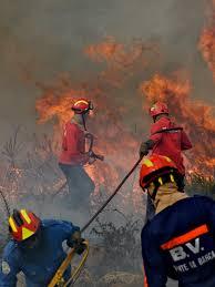 Важность проведения пожарной экспертизы