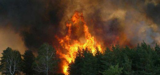 Независимая экспертиза причин возникновения пожаров по вине человека: основные данные